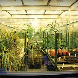 Inside one of the controlled-environment plant growth rooms