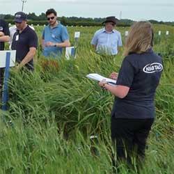 Demonstrating plant genetic innovation at NIAB Innovation Farm