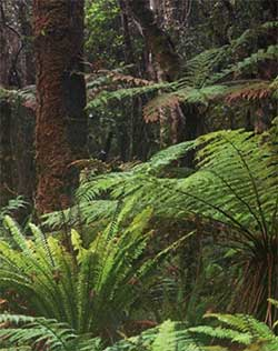Lowland temperate rain forest