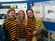 bees-lg.jpg