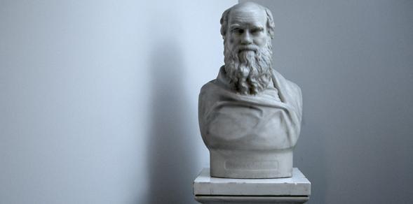 Darwin bust 590