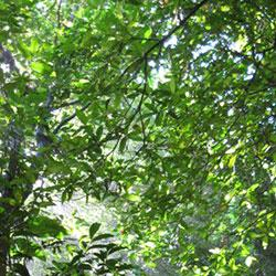 Microclimate moderates plant responses to macroclimate warming
