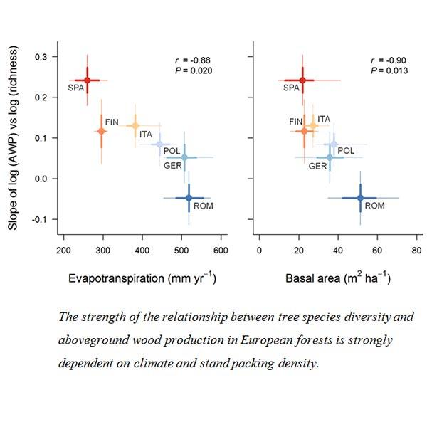 Climate modulates diversity-productivity relationships in forests