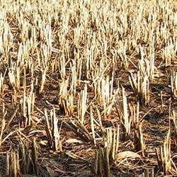 UK institutions and Indian government sign agreement on crop science
