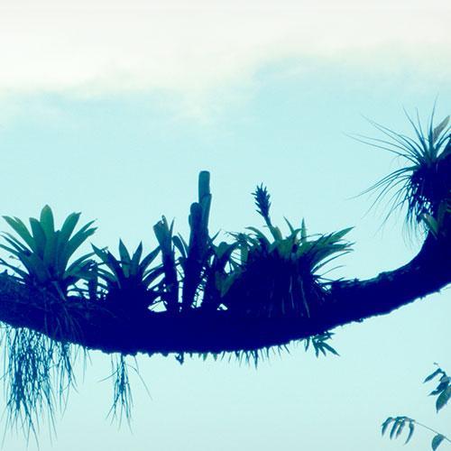 Bromeliad evolution: from adversity to diversity