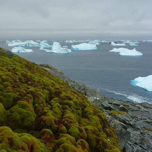 Widespread ecological changes in Antarctica