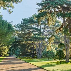 Botanic gardens 'key to saving plants'