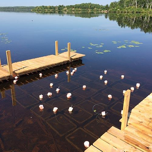 Digging into lake microbiomes