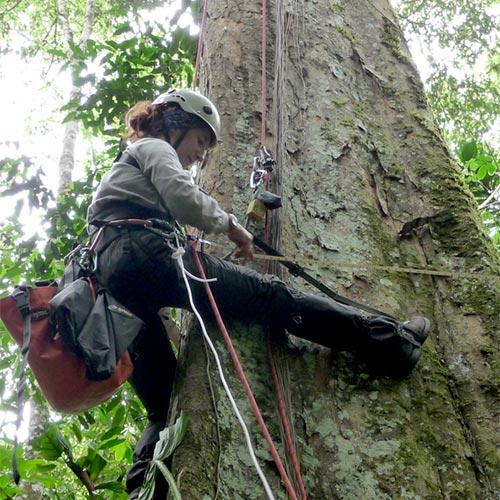 New insights for cloudforest epiphyte distribution and diversity